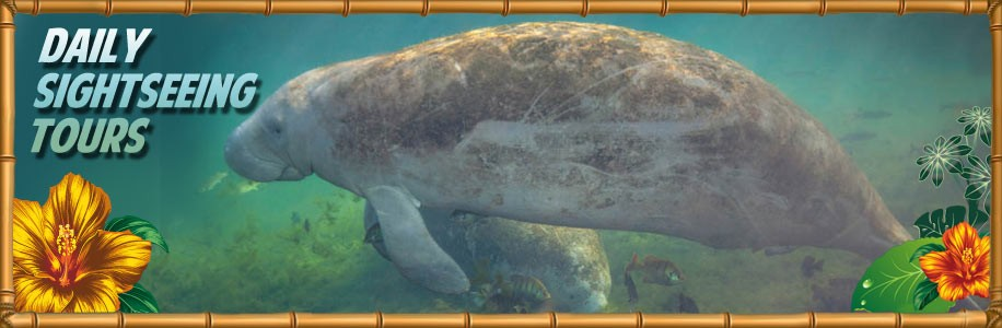 Encounter Manatees
