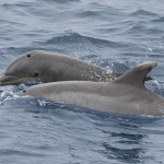 Two Dolphins Playing