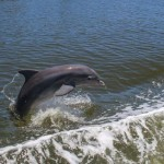636667097949970268-dolphin-jumping